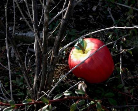 Geocaching Tarnversteck Apfel in der Natur