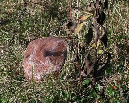 CacheQuarter Tarnfix - Findling braun in der Natur