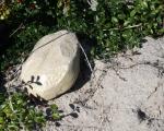 Findling Geocache Versteck sand in der Natur