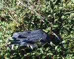 Findling Geocache Versteck schwarz in der Natur