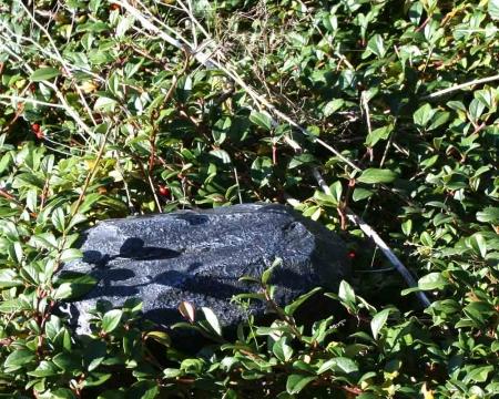 CacheQuarter Tarnfix - Findling schwarz in der Natur